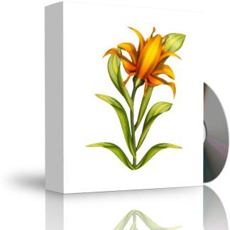 Caja con CD. La carátula de la caja muestra flor dibujada al óleo